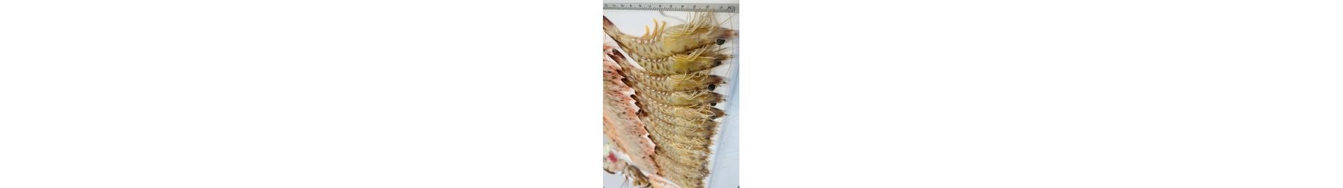 Ofertas de pescado y marisco fresco