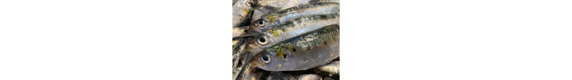 Comprar sardina ibérica