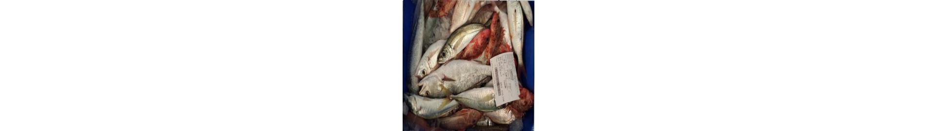Comprar pescado para sopa  a domicilio