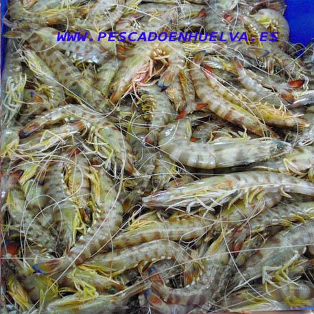 Comprar langostino de sanlucar o Huelva frescos