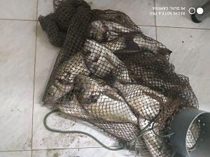 Ofertas de pescados y mariscos