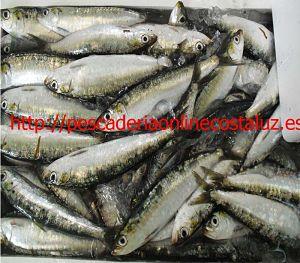 Comprar sardina ibérica fresca