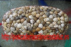 Chirlas de Andalucía (Huelva)